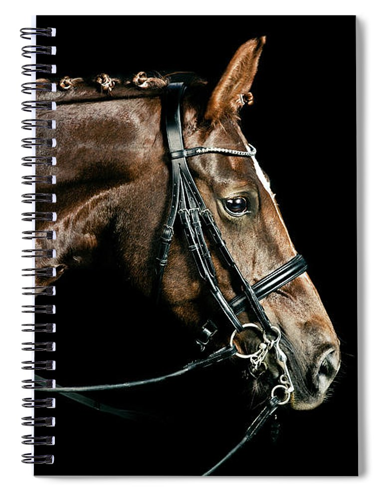 Horse Spiral Notebook featuring the photograph Chestnut Dressage Horse Groomed For A by Anja Hild