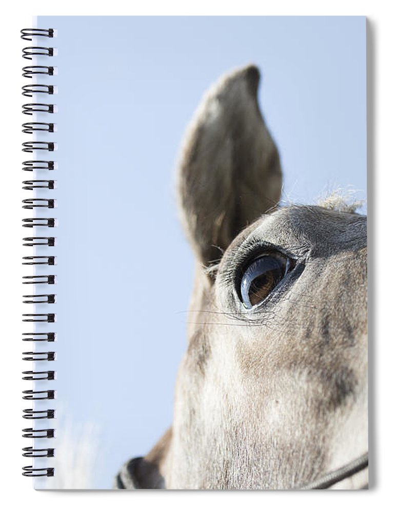 Horse Spiral Notebook featuring the photograph Close-up by Caitlyn Grasso