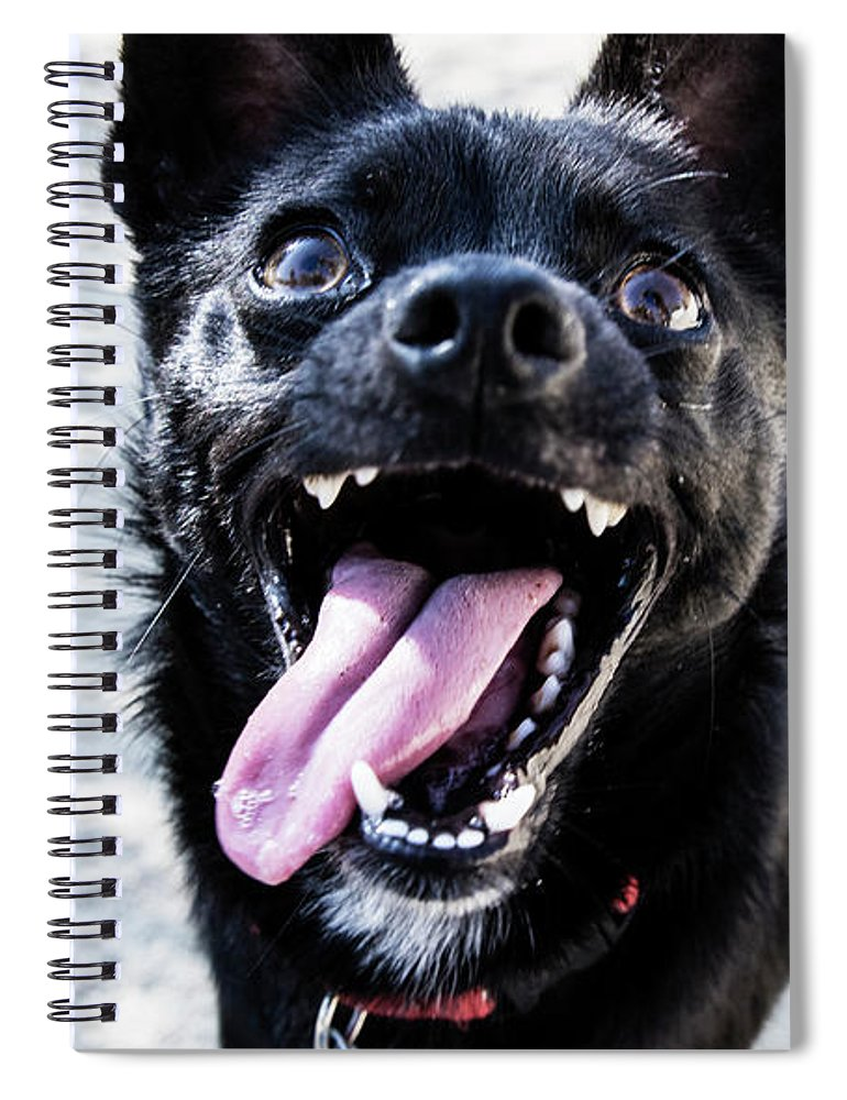 Pets Spiral Notebook featuring the photograph Close-up Shot Of A Little Black Dog - by Amandafoundation.org
