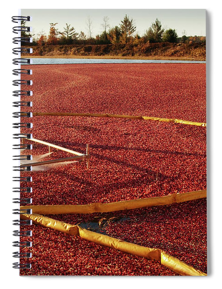 Working Spiral Notebook featuring the photograph Cranberry Farm Harvesting For by Yinyang