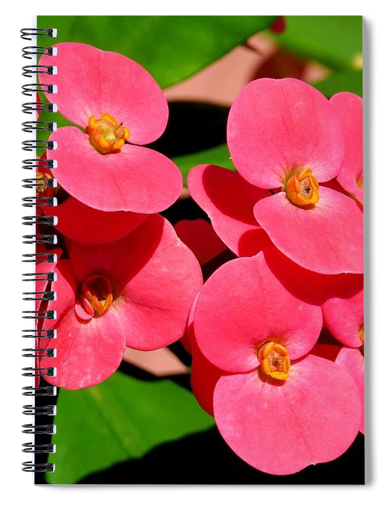 Crown Of Thorns Spiral Notebook featuring the photograph Crown Of Thorns by Zina Stromberg
