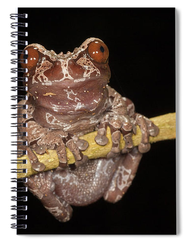 Feb0514 Spiral Notebook featuring the photograph Crowned Frog Costa Rica by Ingo Arndt