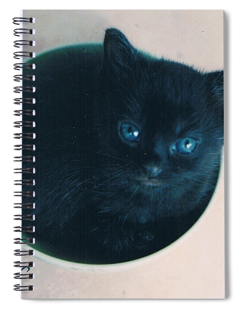 Cat Spiral Notebook featuring the photograph Cup O'Kitty by Seth Weaver
