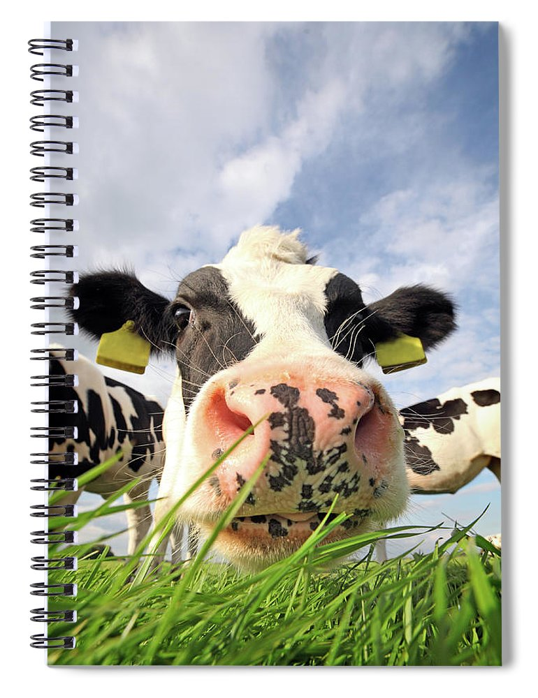 Grass Spiral Notebook featuring the photograph Curious Cow by Marcel Ter Bekke