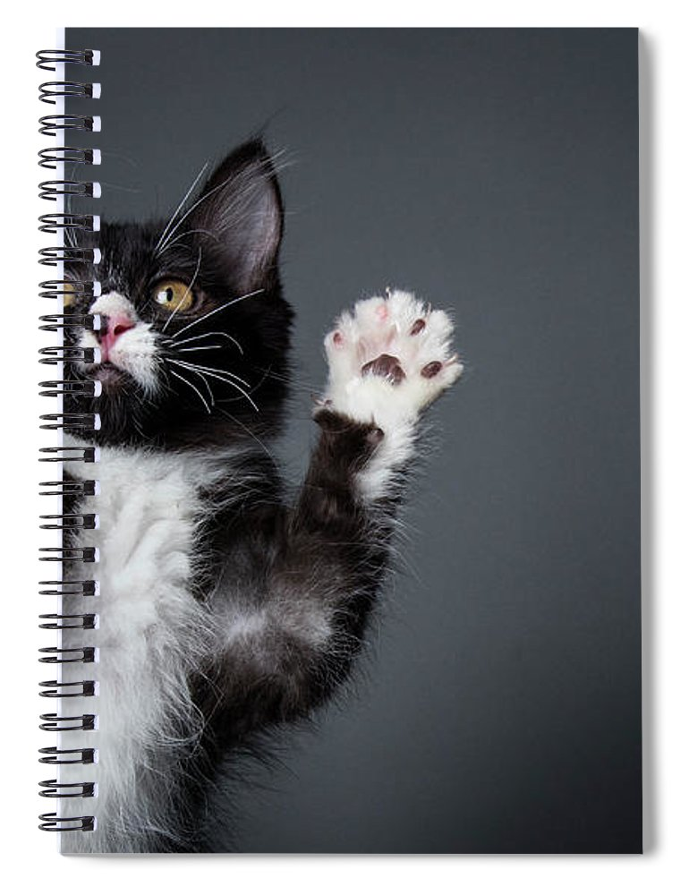 Pets Spiral Notebook featuring the photograph Cute Kitten Playing - The Amanda by Amandafoundation.org