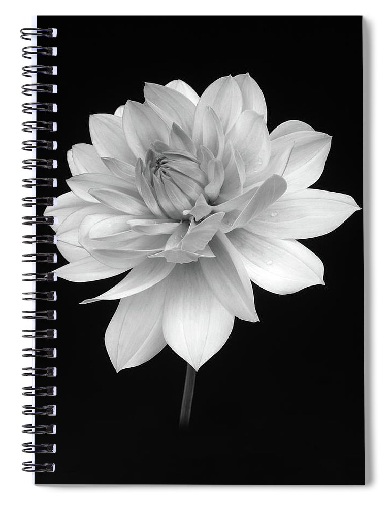 Haslemere Spiral Notebook featuring the photograph Dahlia In Gentle Shades Of Grey by Rosemary Calvert