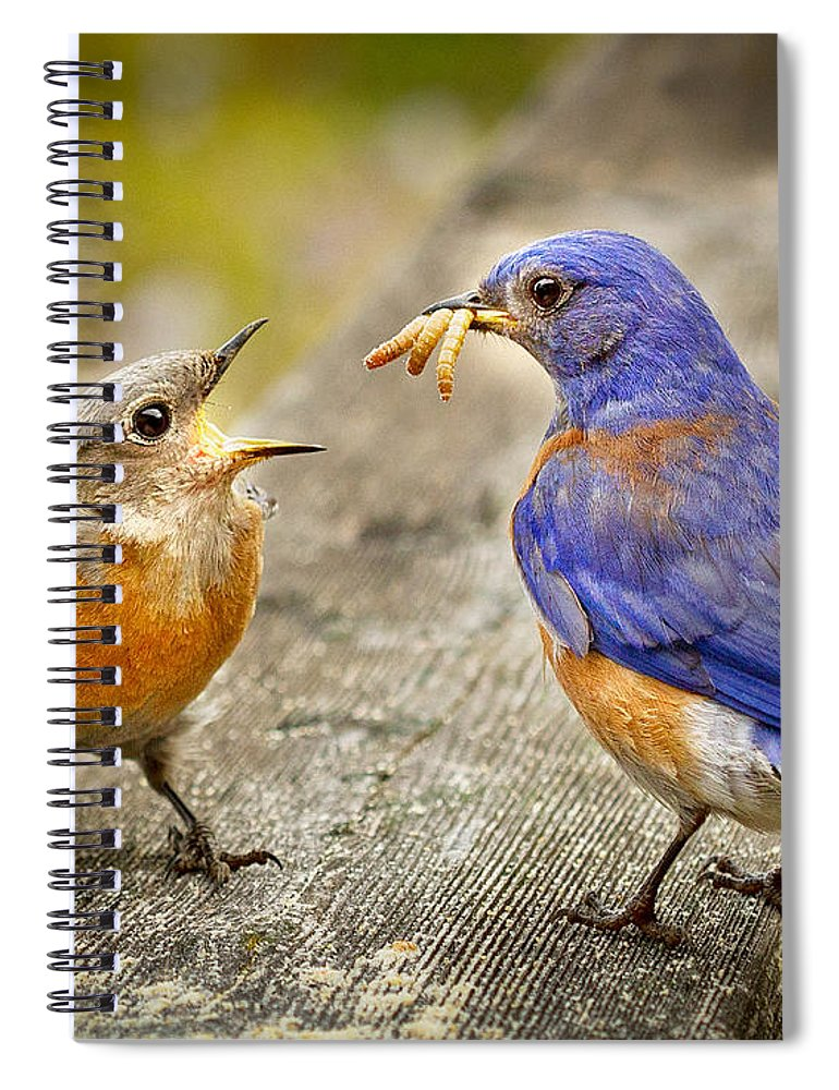 Animals Spiral Notebook featuring the photograph Dinner by Jean Noren