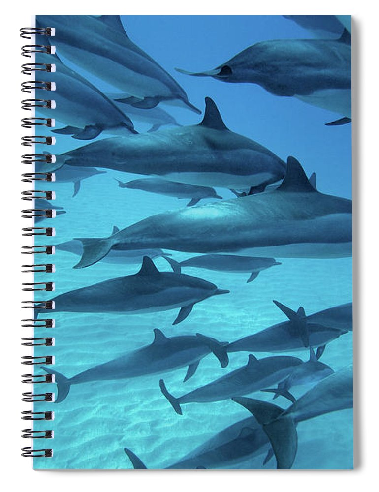 Underwater Spiral Notebook featuring the photograph Dolphins Spinners by M Swiet Productions