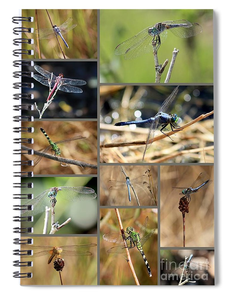 Dragonflies Spiral Notebook featuring the photograph Dragonfly Collage by Carol Groenen