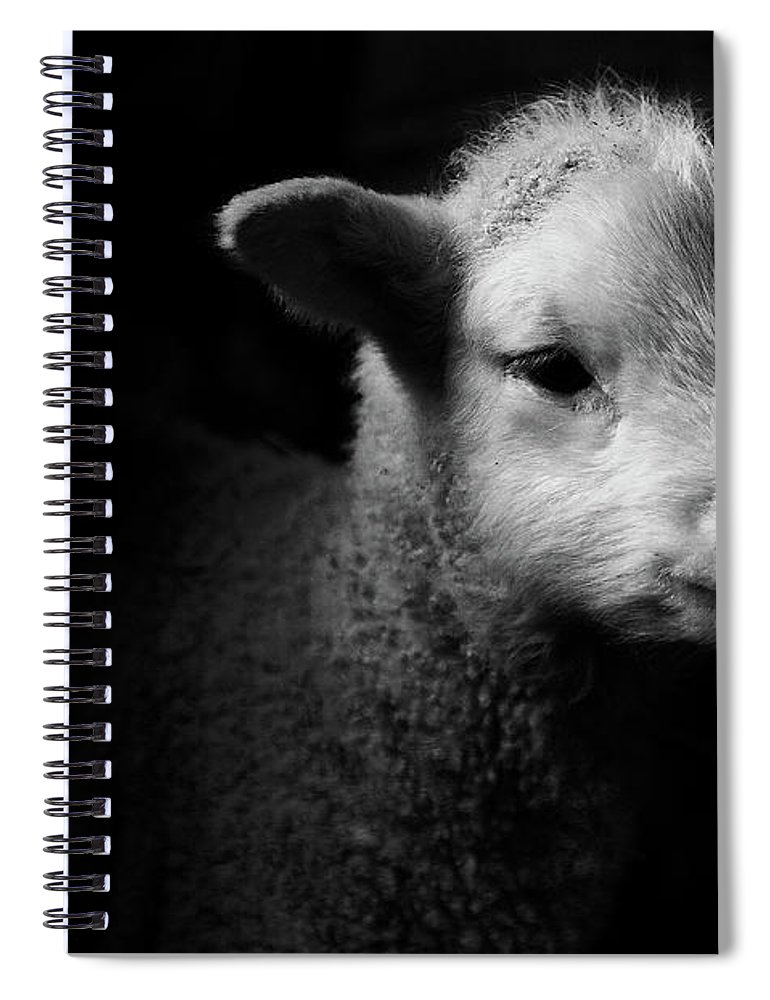 Animal Themes Spiral Notebook featuring the photograph Dramatic Lamb Black & White by Michael Neil O'donnell