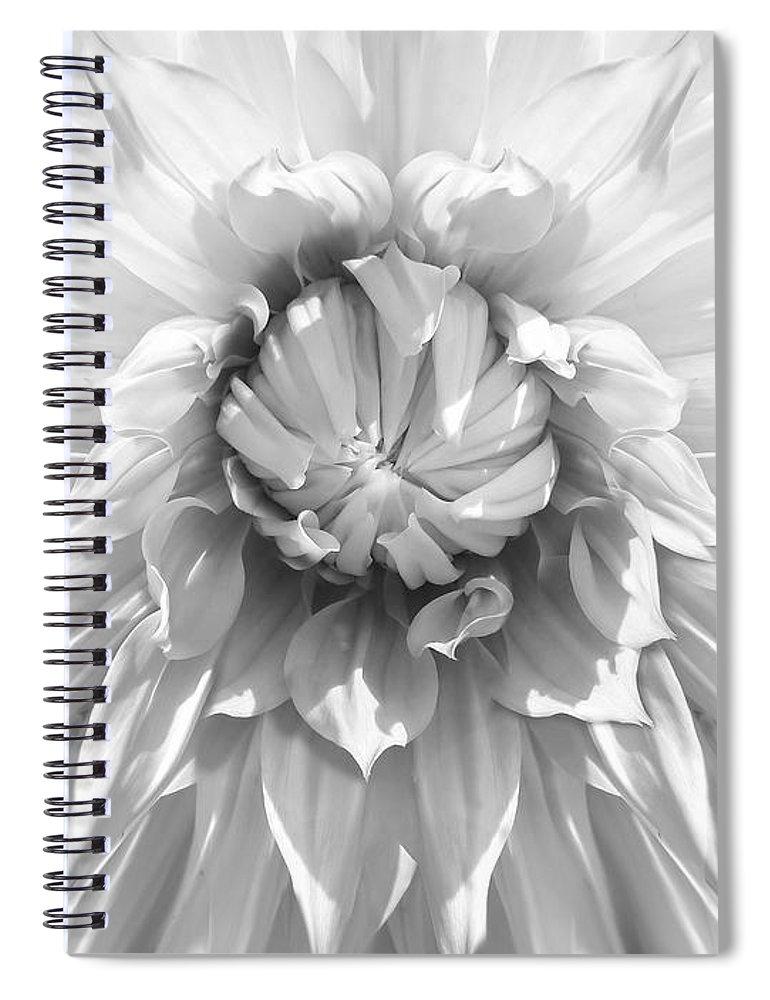 Dahlia Spiral Notebook featuring the photograph Dramatic White Dahlia Flower Monochrome by Jennie Marie Schell