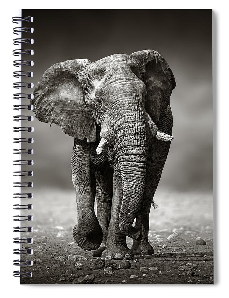 Elephant Spiral Notebook featuring the photograph Elephant approach from the front by Johan Swanepoel