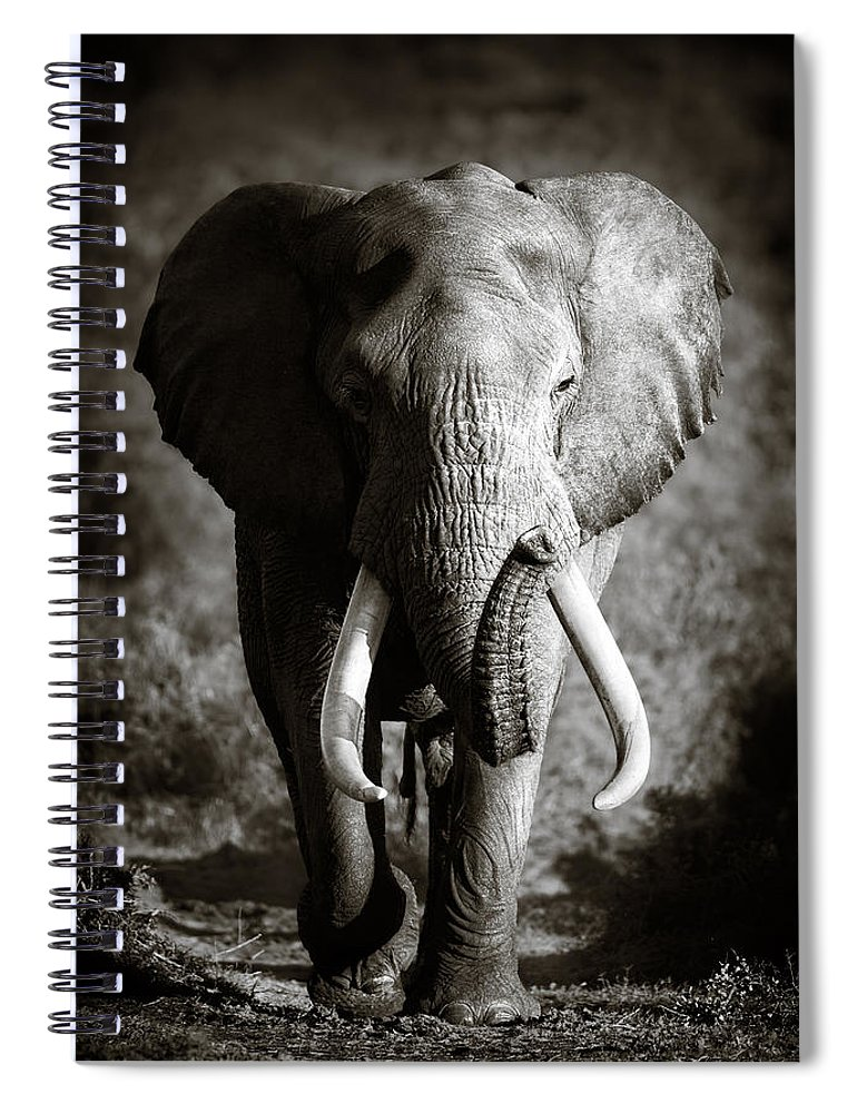 Elephant Spiral Notebook featuring the photograph Elephant Bull by Johan Swanepoel