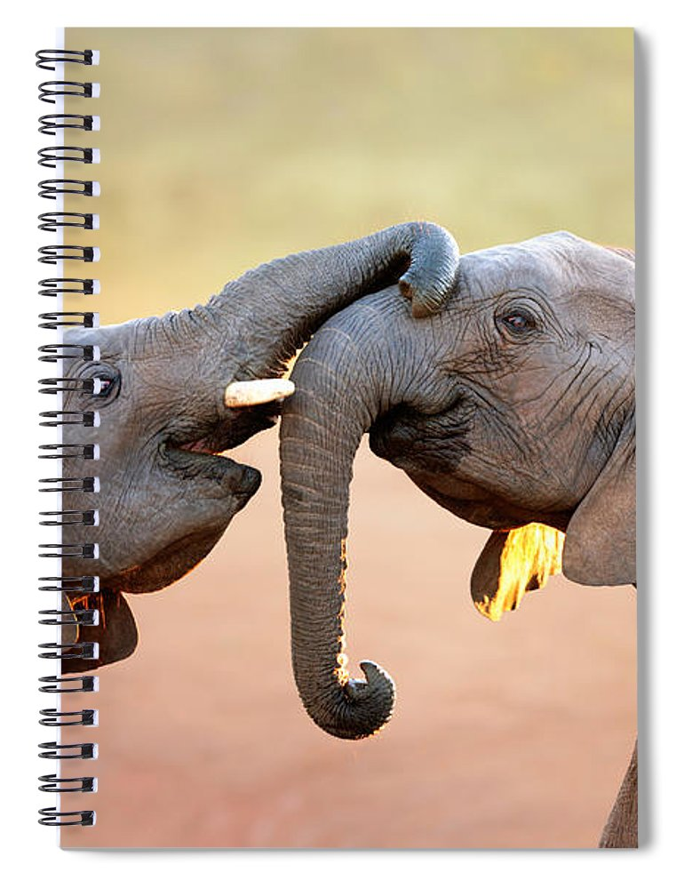 Elephant Spiral Notebook featuring the photograph Elephants touching each other by Johan Swanepoel