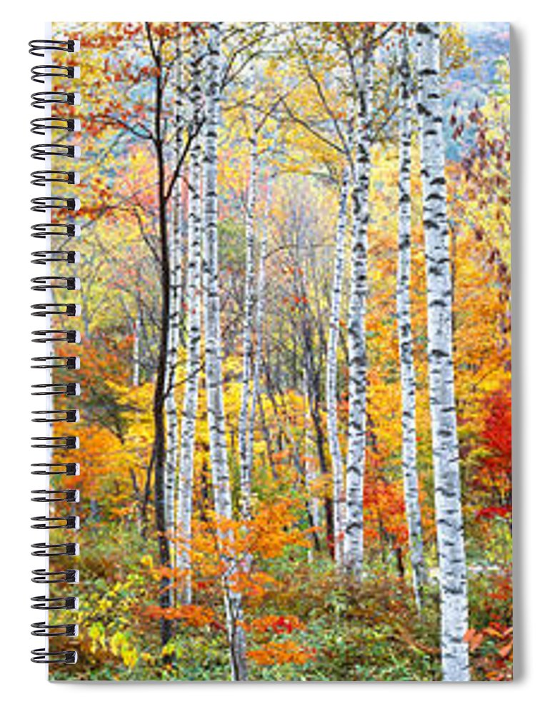 Photography Spiral Notebook featuring the photograph Fall Trees, Shinhodaka, Gifu, Japan by Panoramic Images