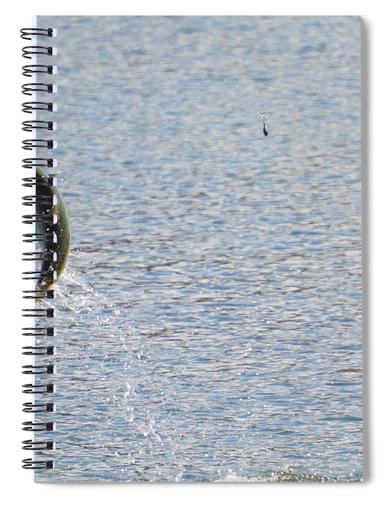 Chinook Salmon Spiral Notebook featuring the photograph Fighting Chinook Salmon by Mike Dawson