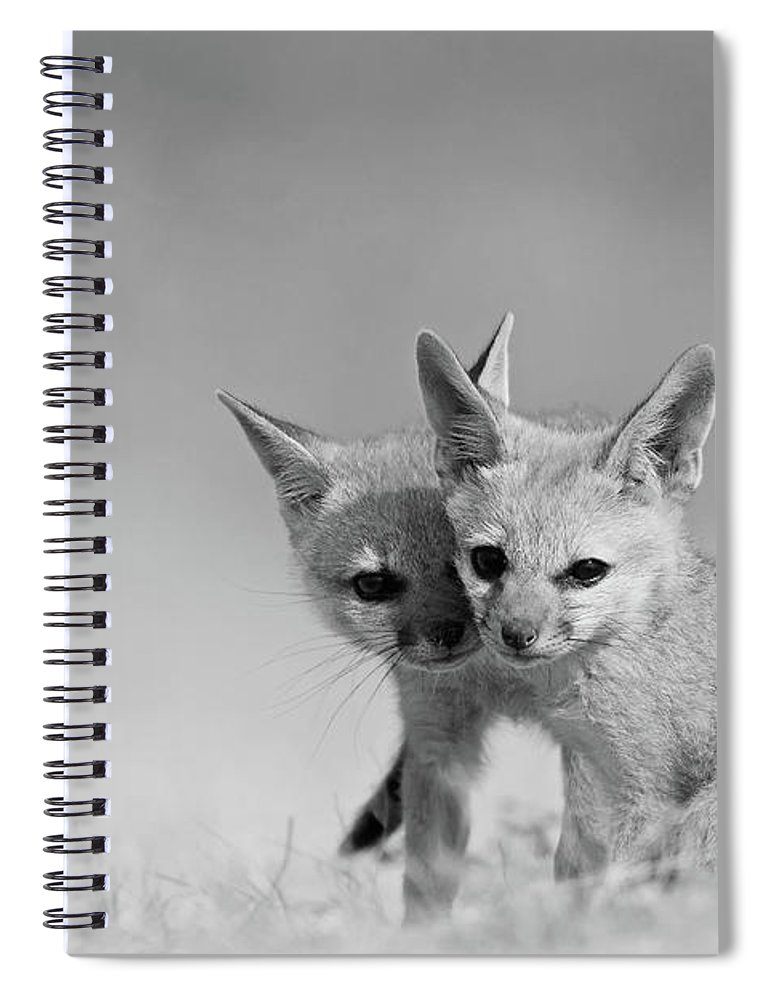 Grass Spiral Notebook featuring the photograph Fox Tits by Santanu Nandy