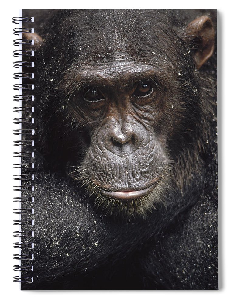 Feb0514 Spiral Notebook featuring the photograph Frodo Covered With Raindrops Gombe by Gerry Ellis
