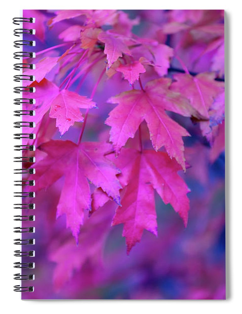 Tranquility Spiral Notebook featuring the photograph Full Frame Of Maple Leaves In Pink And by Noelia Ramon - Tellinglife