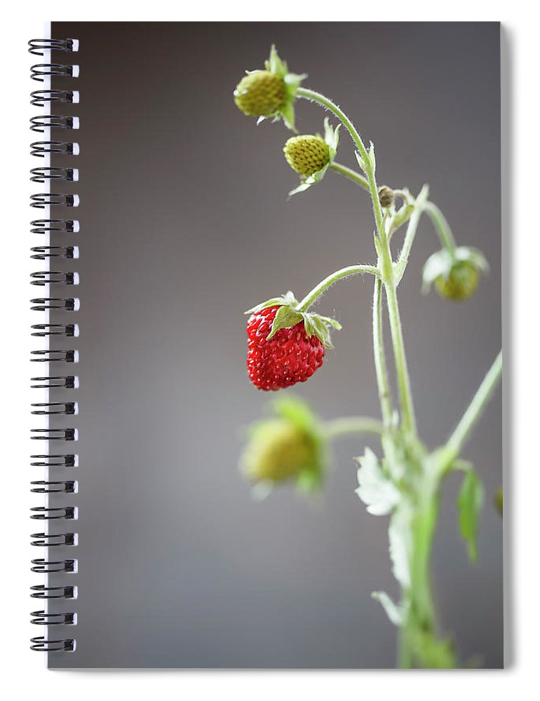Wild Strawberry Spiral Notebook featuring the photograph Germany, Baden Wuerttemberg, Wild by Westend61