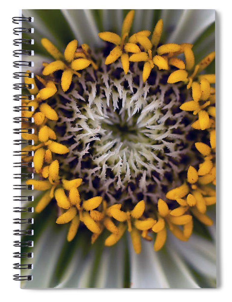 Outdoors Spiral Notebook featuring the photograph Germany, Zinnia Flower, Close Up by Westend61