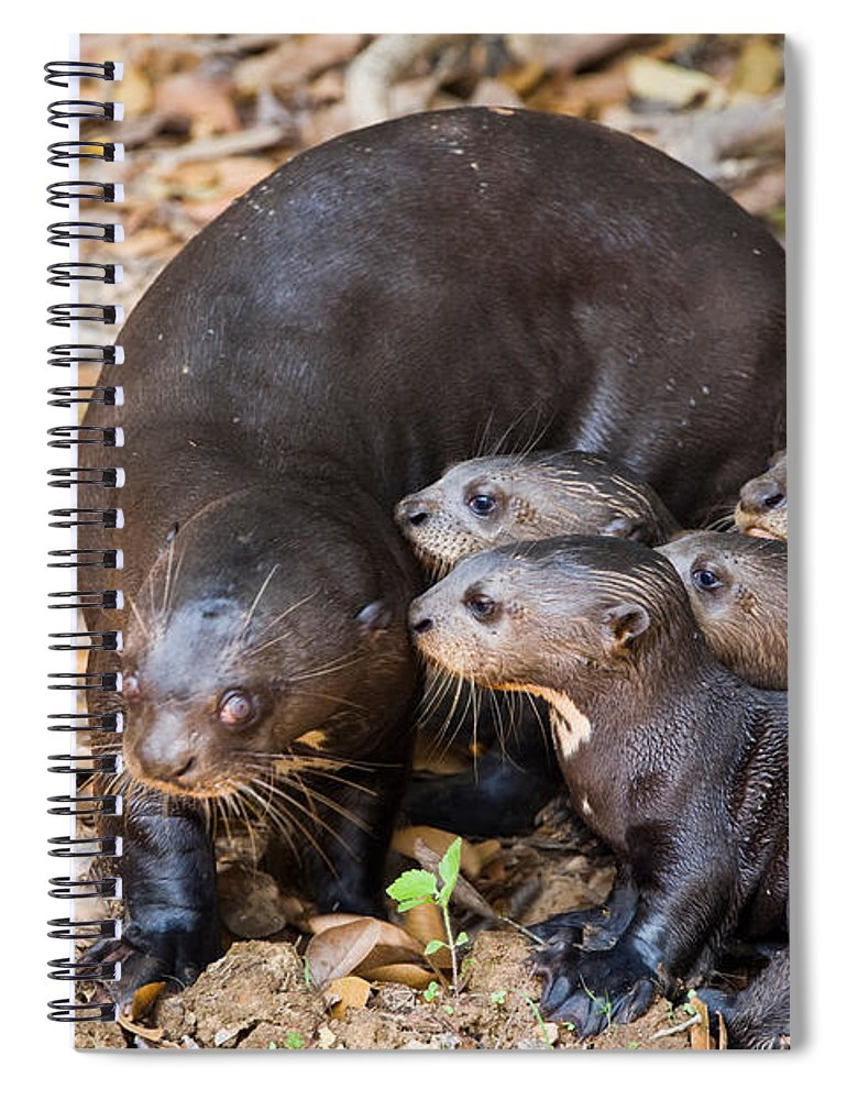 Photography Spiral Notebook featuring the photograph Giant Otter Pteronura Brasiliensis by Panoramic Images