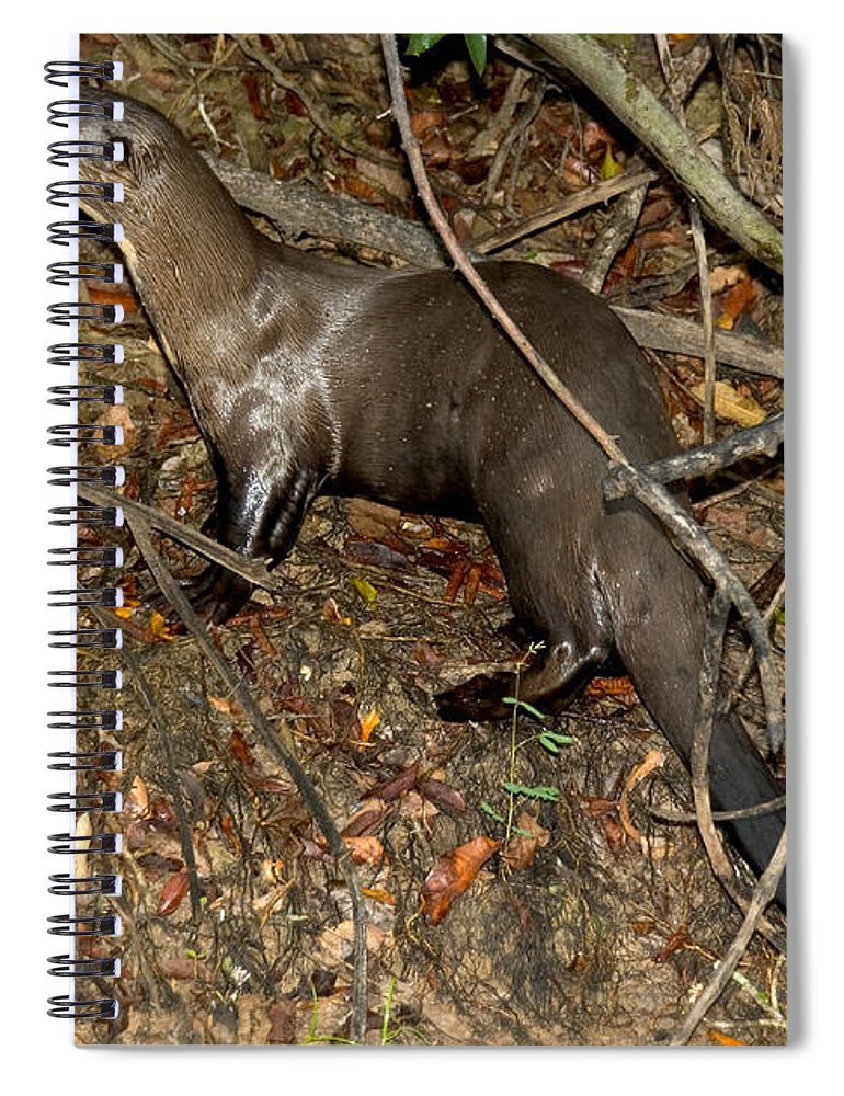 Giant River Otter Spiral Notebook featuring the photograph Giant River Otter by Gregory G. Dimijian, M.D.