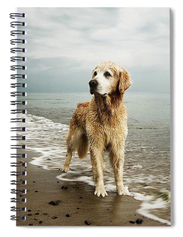 Pets Spiral Notebook featuring the photograph Golden Retriever On Beach by Jutta Bauer