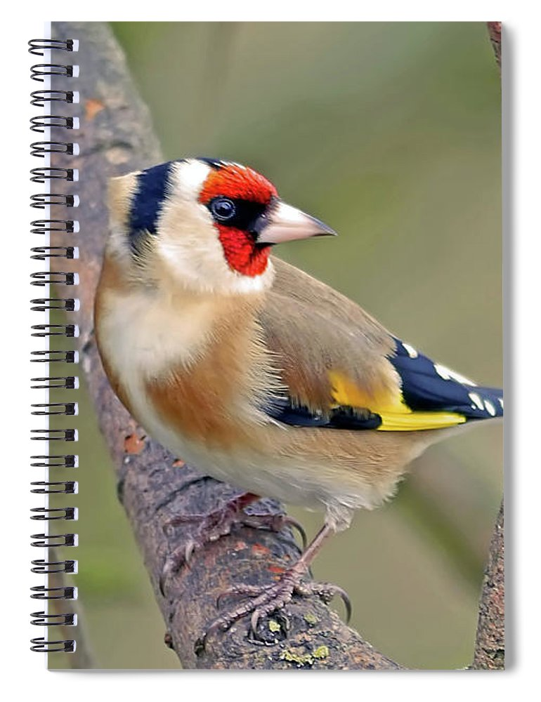 Animal Themes Spiral Notebook featuring the photograph Goldfinch by Kevspix