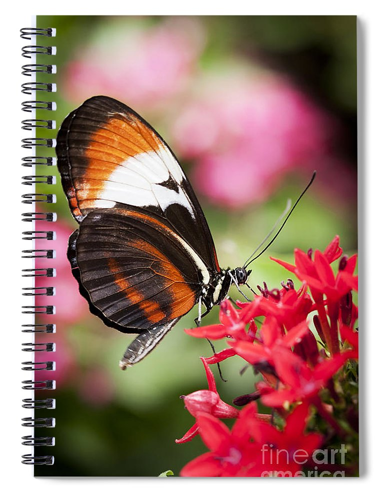 Butterfly Spiral Notebook featuring the photograph Grace by Patty Colabuono
