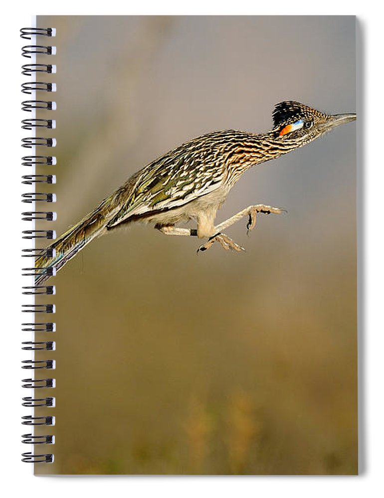 Animal Spiral Notebook featuring the photograph Greater Roadrunner Leaping by Scott Linstead