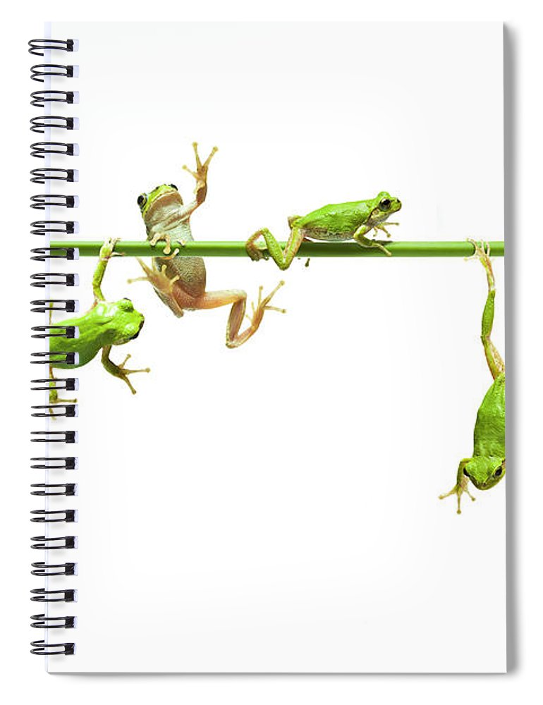 Hanging Spiral Notebook featuring the photograph Green Flogs Each Other Freely On Stem by Yuji Sakai