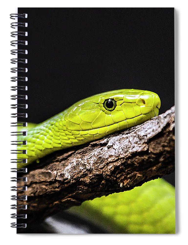 Long Spiral Notebook featuring the photograph Green Mamba - Mamba Verte - Grüne Mamba by A.töfke Cologne Germay