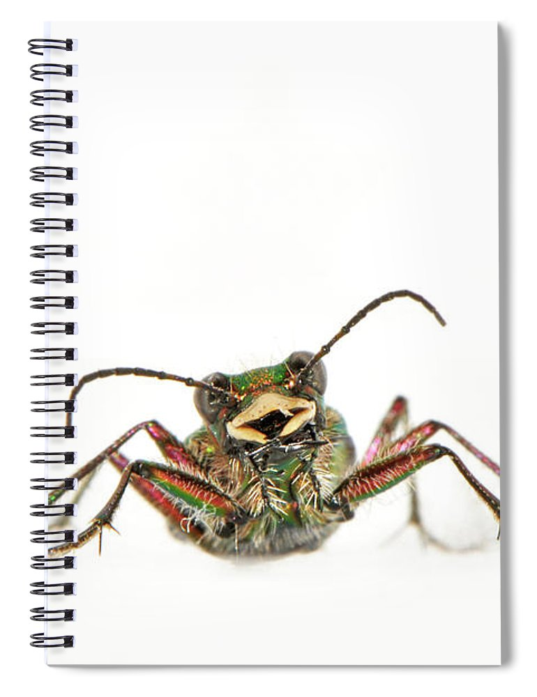White Background Spiral Notebook featuring the photograph Green Tiger Beetle by Robert Trevis-smith