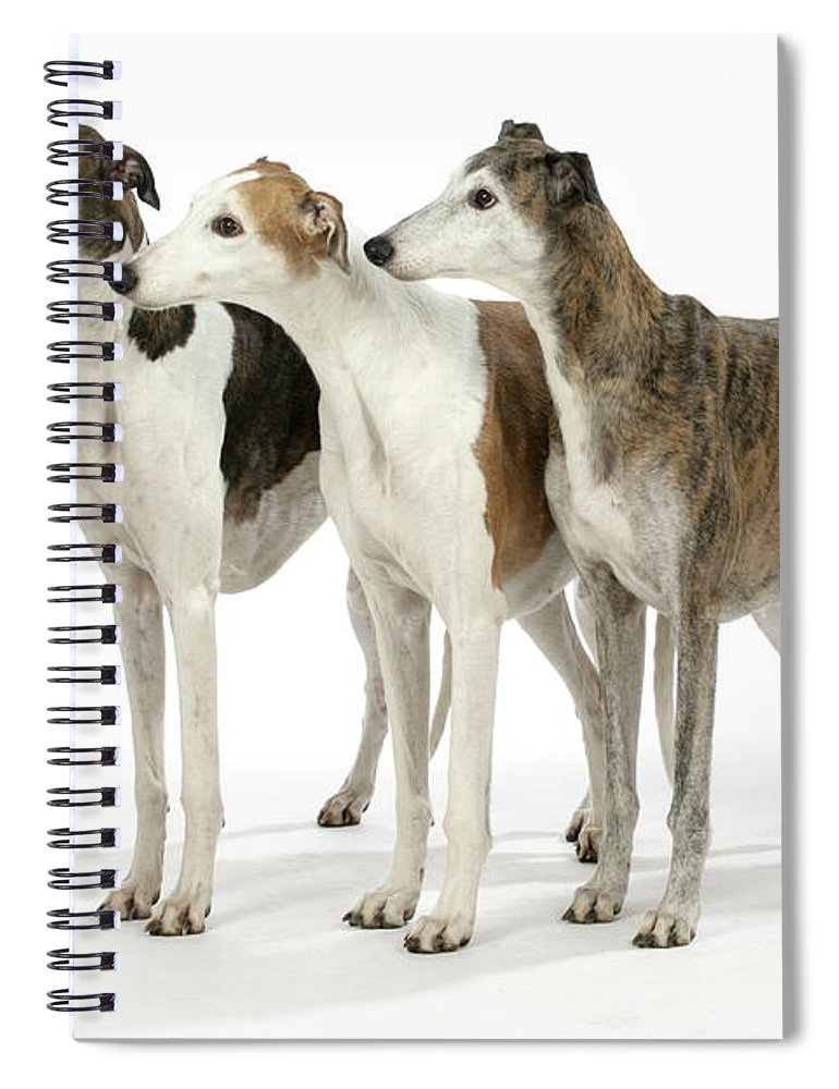 Greyhound Spiral Notebook featuring the photograph Greyhound Dogs by John Daniels