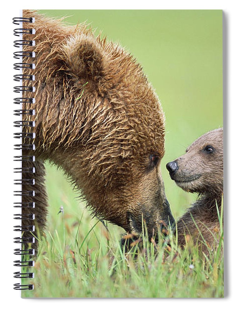 00345260 Spiral Notebook featuring the photograph Grizzly Bear And Cub in Katmai by Yva Momatiuk John Eastcott