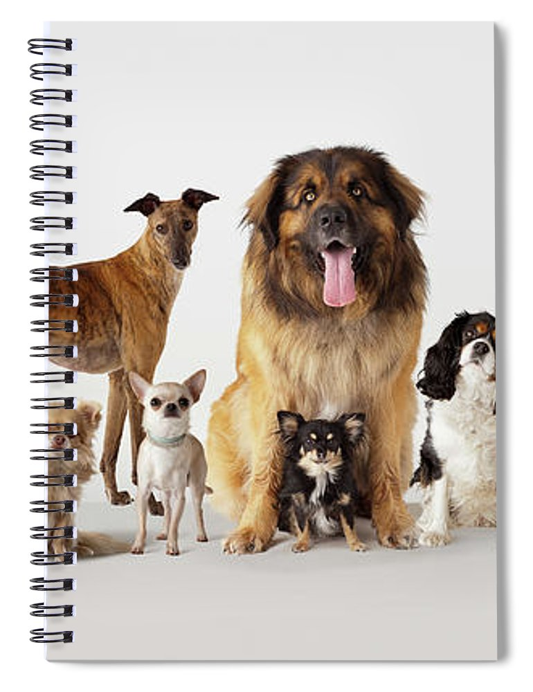 Pets Spiral Notebook featuring the photograph Group Portrait Of Dogs by Compassionate Eye Foundation/david Leahy