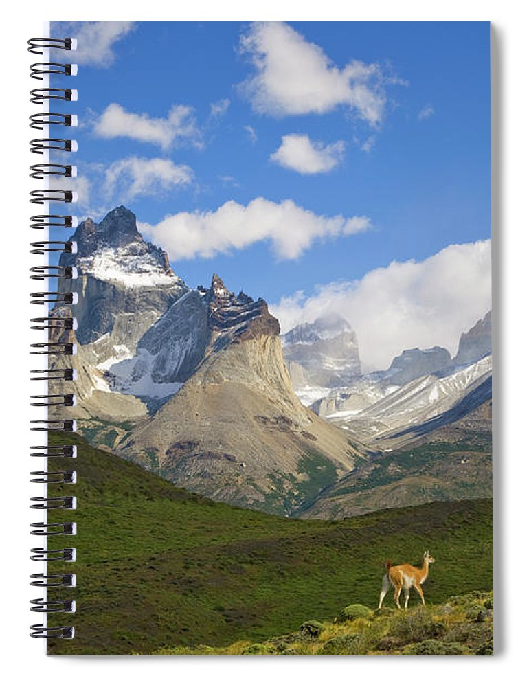 00345710 Spiral Notebook featuring the photograph Guanaco And Cuernos Del Paine Peaks by Yva Momatiuk John Eastcott
