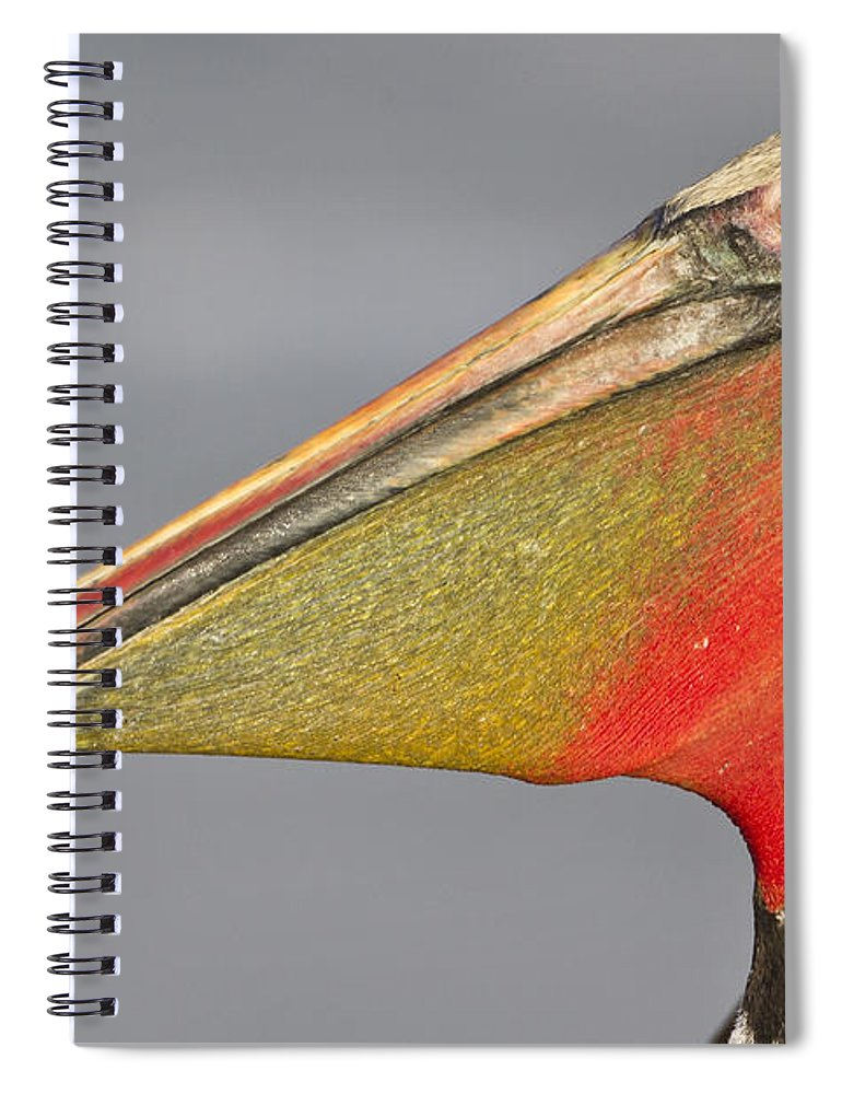 Pelican Spiral Notebook featuring the photograph Handsome In Red by Bryan Keil