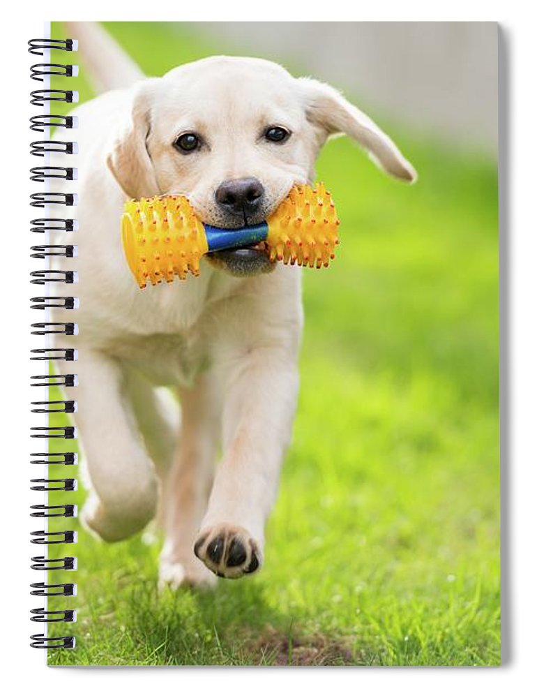 Pets Spiral Notebook featuring the photograph Happy Hour by Stefan Cioata