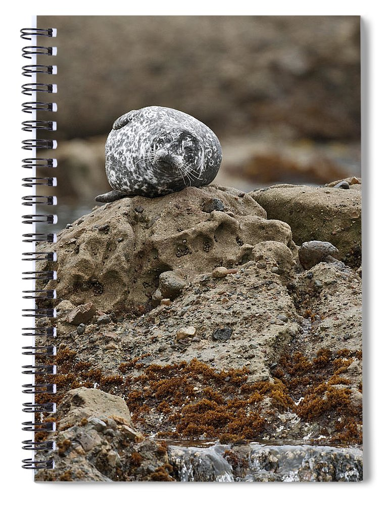 Harbor Spiral Notebook featuring the photograph Harbor Seal by Gary Langley