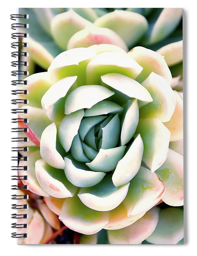 Scenics Spiral Notebook featuring the photograph Hens And Chicks Succulent In Soft Focus by Lazingbee