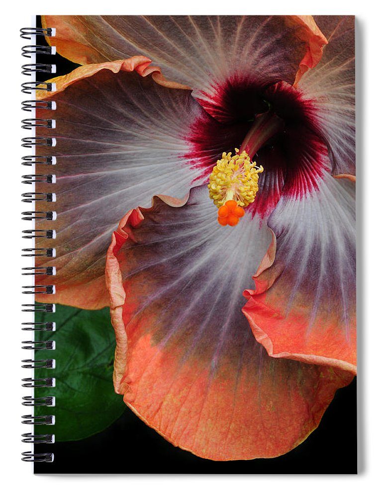Hibiscus Spiral Notebook featuring the photograph Hibiscus Key Largo by Dave Mills