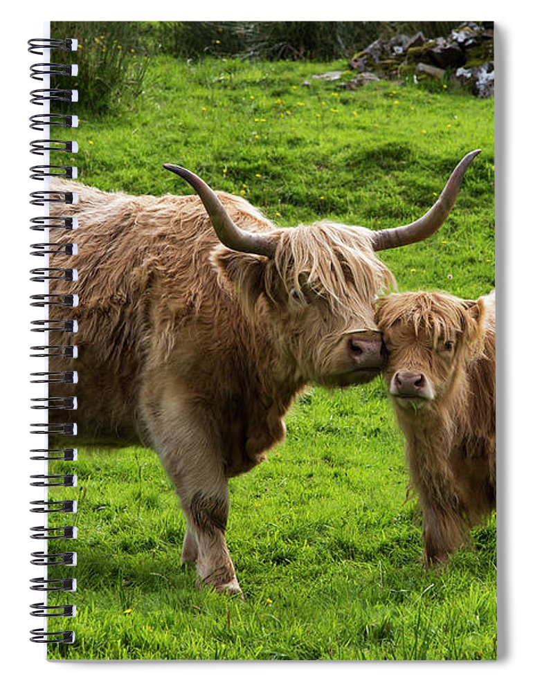 Horned Spiral Notebook featuring the photograph Highland Cattle And Calf by John Short / Design Pics