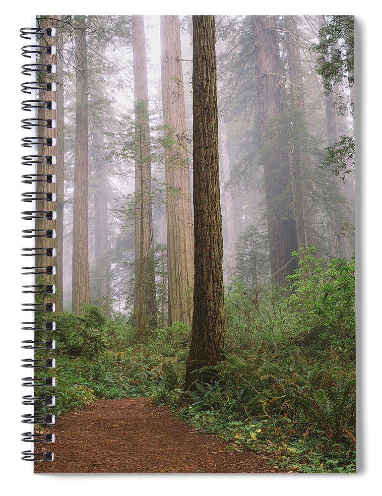 Tranquility Spiral Notebook featuring the photograph Hiking Through Californias Redwoods by David Hoefler