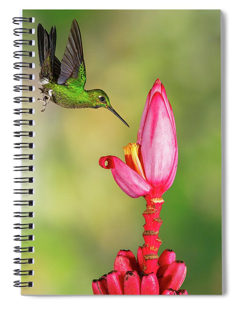 Green-crowned Brilliant Spiral Notebook featuring the photograph Hummingbird , Green-crowned Brilliant by Kencanning