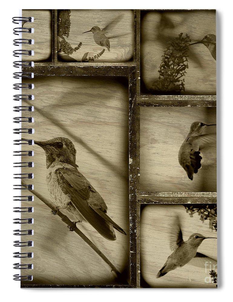 Hummingbirds Spiral Notebook featuring the photograph Hummingbird Family Portraits by Carol Groenen