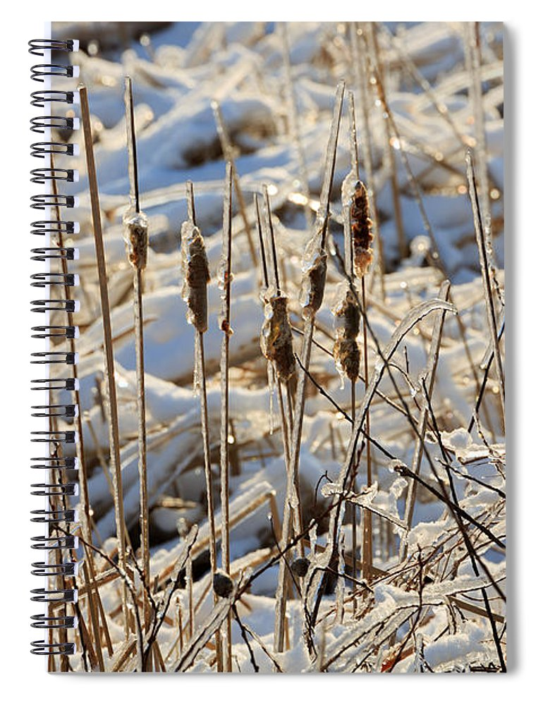 Ice Spiral Notebook featuring the photograph Ice Coated Bullrushes by Louise Heusinkveld