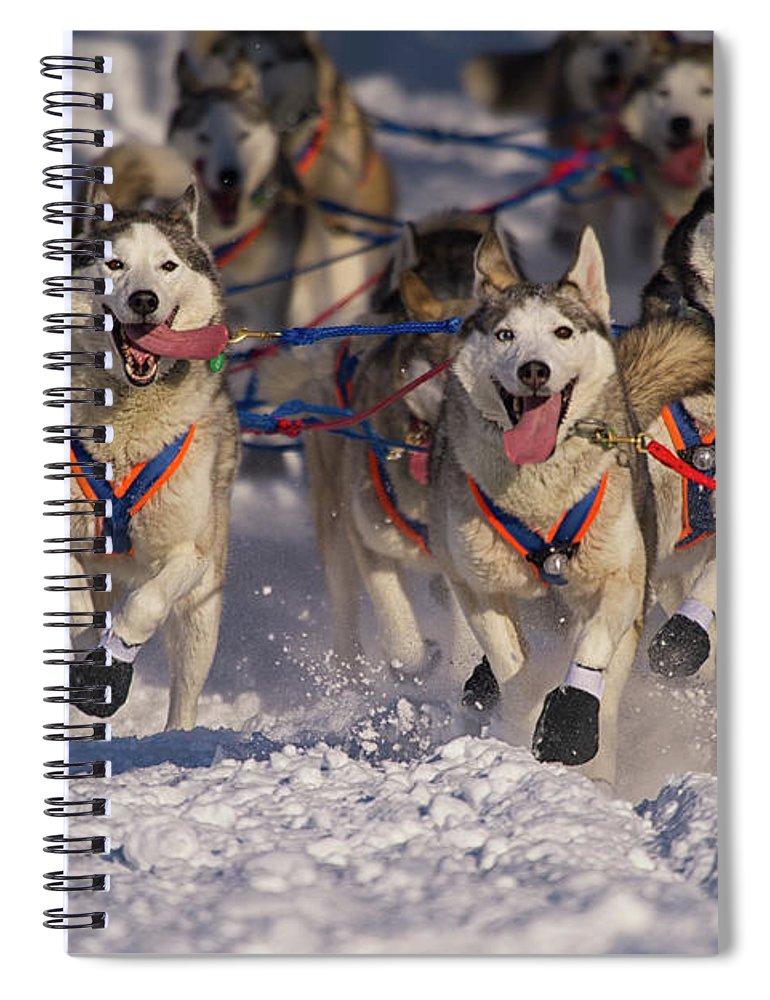 Snow Spiral Notebook featuring the photograph Iditarod Huskies by Alaska Photography