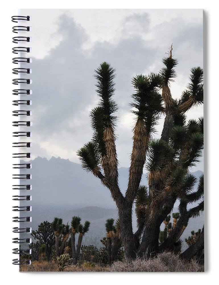 Joshua Tree Spiral Notebook featuring the photograph Joshua Tree Forest Ivanpah Valley by Kyle Hanson